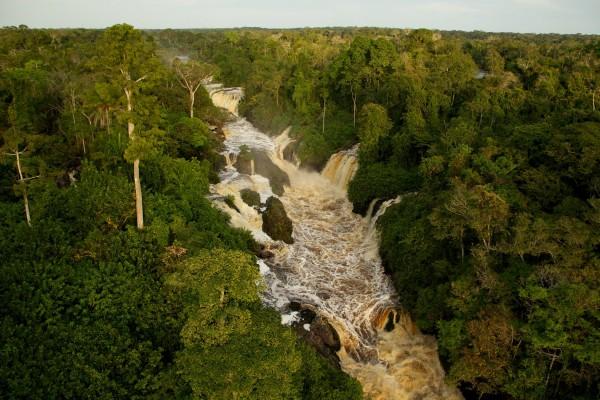 forêt cascade