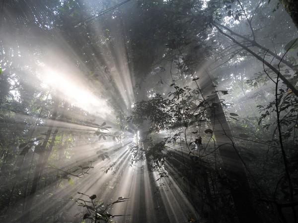 forêt photo magnifique