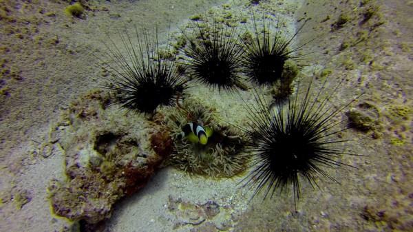 Seychelles.plongée Némo Jaune