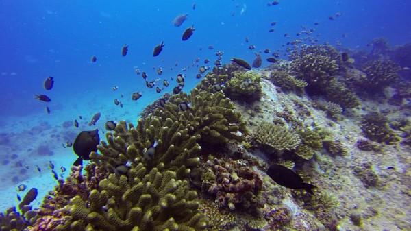 Seychelles.plongée récifs 2