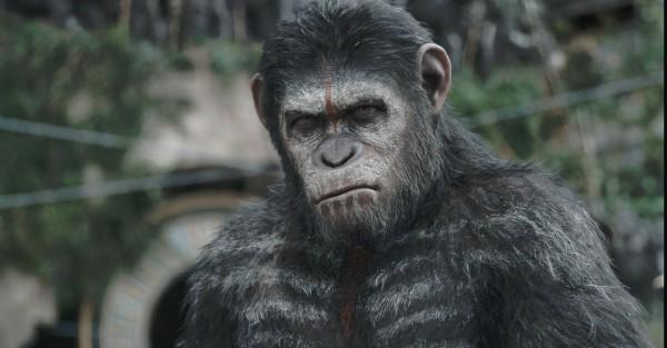 La Planète des singes  l'affrontement (2)